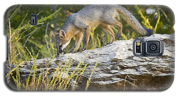 Gray Fox Hunting The Bluff Galaxy S5 Case
