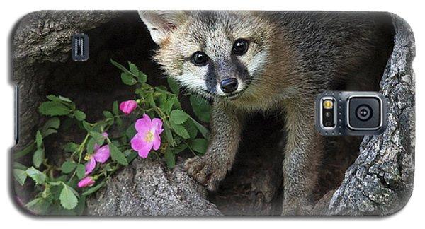 Gray Fox Kit Galaxy S5 Case