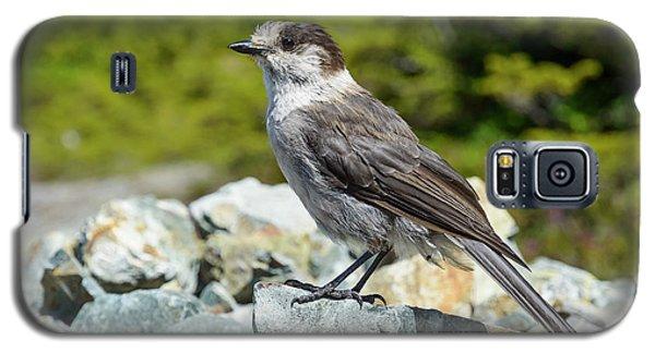 Gray Jay, Canada's National Bird Galaxy S5 Case