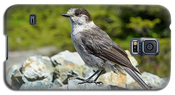 Galaxy S5 Case featuring the photograph Gray Jay, Canada's National Bird by Kathy King