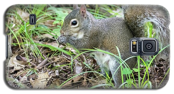 Gray Squirrel Eating Galaxy S5 Case