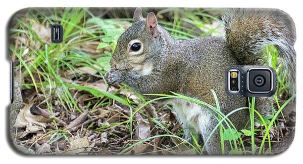 Gray Squirrel Eating Galaxy S5 Case