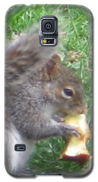 Gray Squirrel With An Apple Core Galaxy S5 Case
