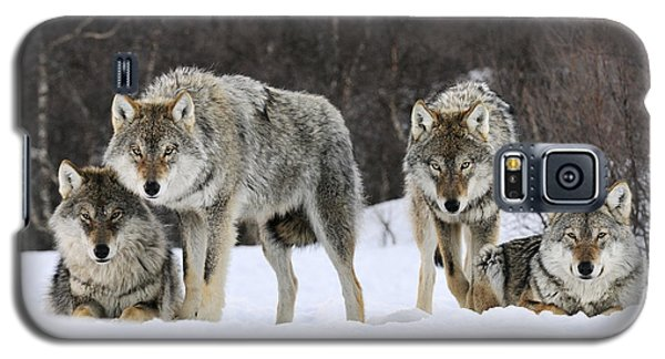 Gray Wolves Norway Galaxy S5 Case