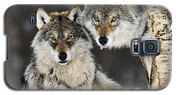 Gray Wolf Canis Lupus Pair In The Snow Galaxy S5 Case