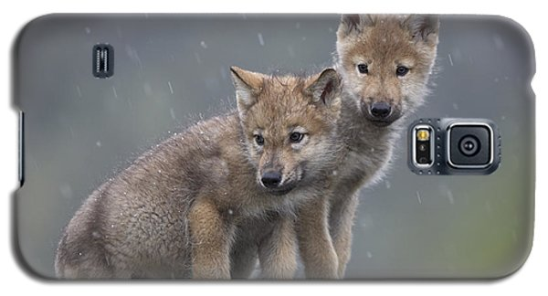 Gray Wolf Canis Lupus Pups In Light Galaxy S5 Case