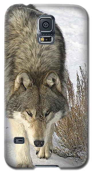 Gray Wolf Galaxy S5 Case