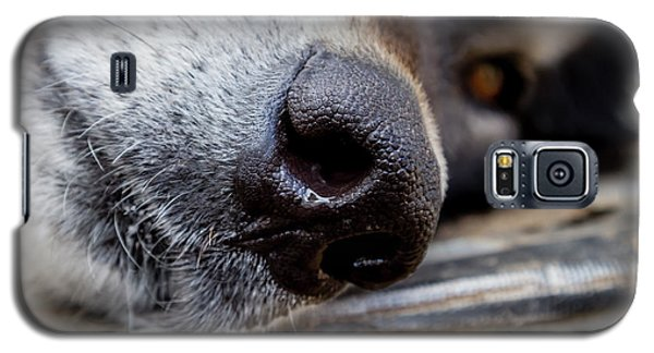 Galaxy S5 Case featuring the photograph Gray Wolf Nose by Teri Virbickis
