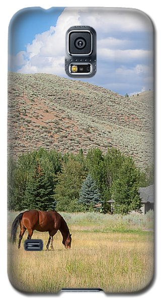 Grazing Horse Galaxy S5 Case