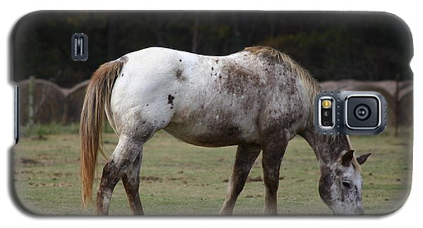 Grazing Time Galaxy S5 Case by Kim Henderson