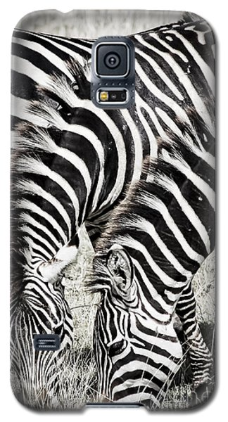 Grazing Zebras Close Up Galaxy S5 Case by Darcy Michaelchuk