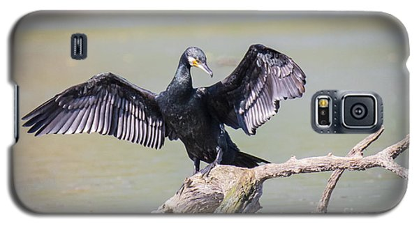 Great Black Cormorant Drying Wings After Fishing Galaxy S5 Case by Jivko Nakev