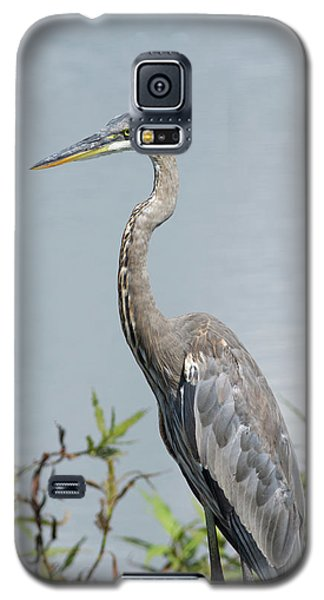 Great Blue Heron #2 Galaxy S5 Case