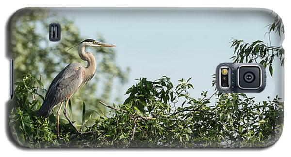 Galaxy S5 Case featuring the photograph Great Blue Heron  2015-18 by Thomas Young
