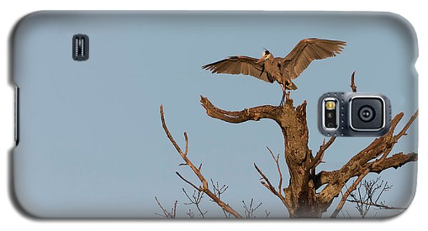Great Blue Heron 2017-7 Galaxy S5 Case by Thomas Young