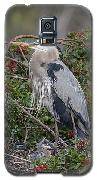 Great Blue Heron And Nestling Galaxy S5 Case