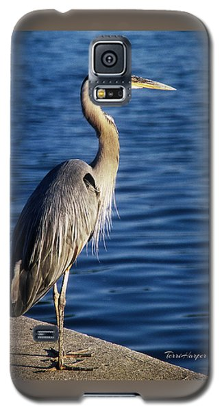 Great Blue Heron At Put-in-bay Galaxy S5 Case