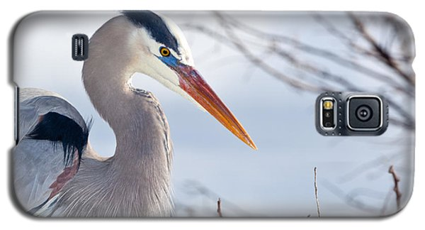 Great Blue Heron At Wakodahatchee Wetlands Galaxy S5 Case