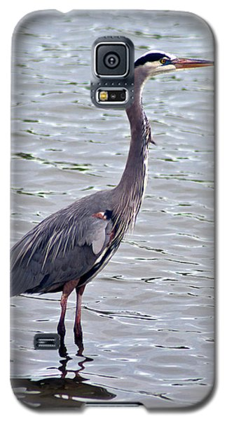 Great Blue Heron Galaxy S5 Case by Bill Barber