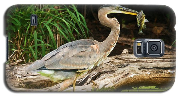 Galaxy S5 Case featuring the photograph Great Blue Heron Catch by Edward Peterson