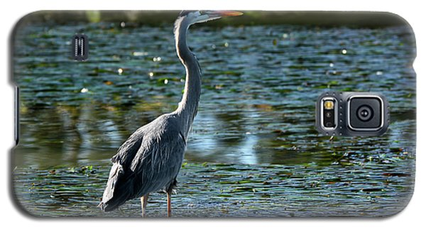 Great Blue Heron Catching The Light Galaxy S5 Case