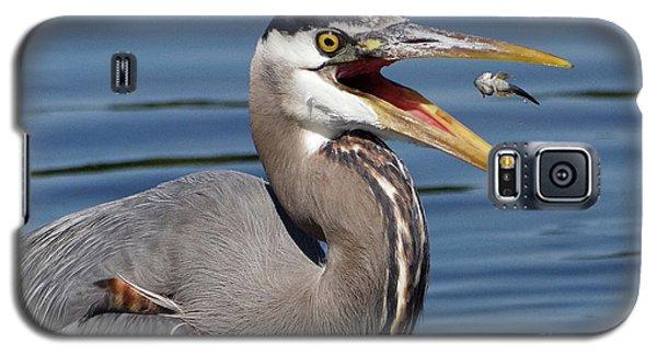Great Blue Heron Feast Galaxy S5 Case