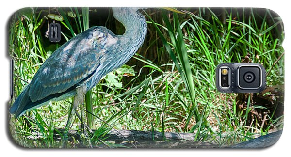 Galaxy S5 Case featuring the photograph Great Blue Heron Fish Meal by Edward Peterson