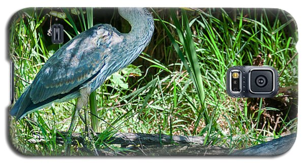 Great Blue Heron Fish Meal Galaxy S5 Case
