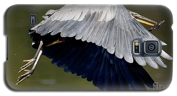 Great Blue Heron Flying With Fish Galaxy S5 Case