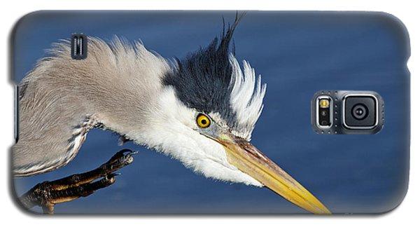 Great Blue Heron - Good Scratch Galaxy S5 Case