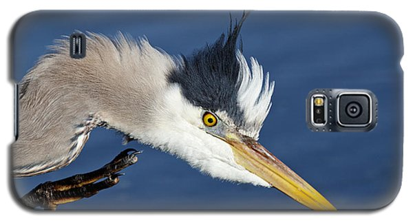 Great Blue Heron - Good Scratch Galaxy S5 Case