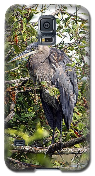 Great Blue Heron In A Tree Galaxy S5 Case