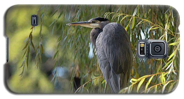 Great Blue Heron In A Willow Tree Galaxy S5 Case
