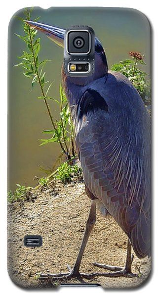 Galaxy S5 Case featuring the photograph Great Blue Heron by Mariola Bitner