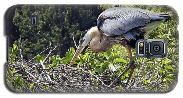 Great Blue Heron On Nest Galaxy S5 Case