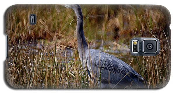 Galaxy S5 Case featuring the photograph Great Blue Heron On The Hunt 3 by Terry Elniski