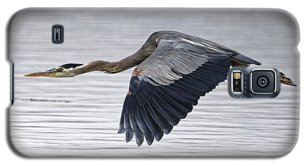 Great Blue Heron Over Still Waters Galaxy S5 Case