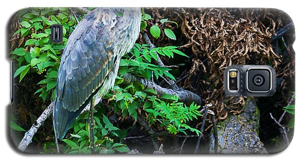 Galaxy S5 Case featuring the photograph Great Blue Heron Perch by Edward Peterson