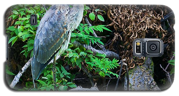 Great Blue Heron Perch Galaxy S5 Case