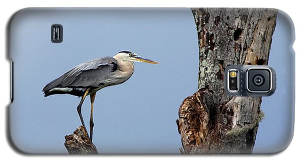 Galaxy S5 Case featuring the photograph Great Blue Heron Perched by Barbara Bowen
