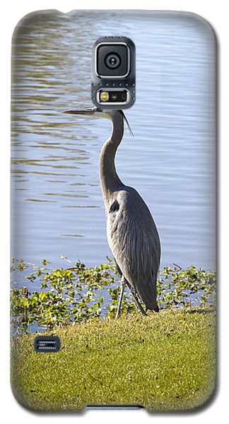 Galaxy S5 Case featuring the photograph Great Blue Heron by Phyllis Denton