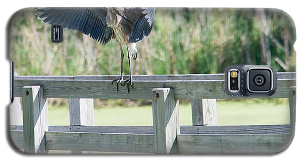 Galaxy S5 Case featuring the photograph Great Blue Heron Preening by Edward Peterson