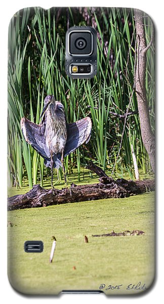 Galaxy S5 Case featuring the photograph Great Blue Heron Sunning by Edward Peterson