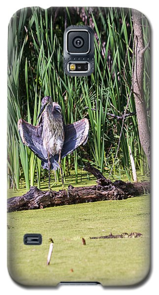 Great Blue Heron Sunning Galaxy S5 Case