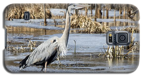 Great Blue Heron Wading  Galaxy S5 Case