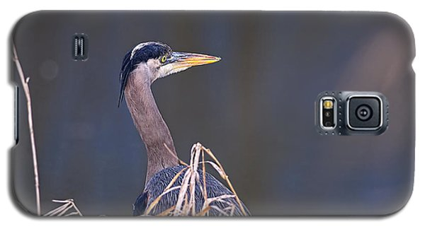 Galaxy S5 Case featuring the photograph Great Blue Heron Waiting by Sharon Talson