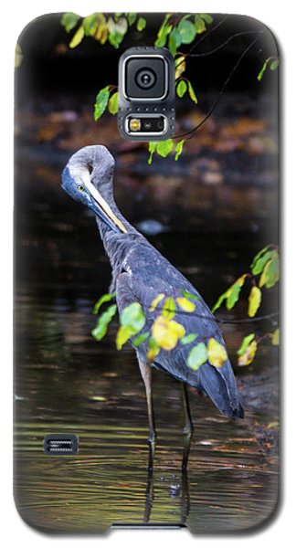 Great Blue Heron With An Itch Galaxy S5 Case