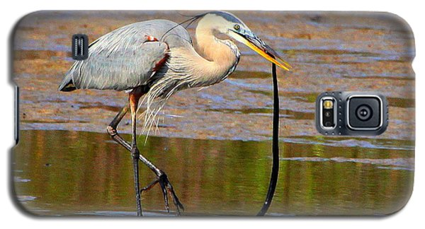 Galaxy S5 Case featuring the photograph Great Blue Heron Wrestles A Snake by Barbara Bowen