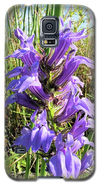 Great Blue Lobelia Galaxy S5 Case
