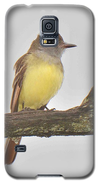 Great Crested Flycatcher Galaxy S5 Case by Alan Lenk
